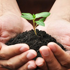 21528457 - hand holding young plant with soil